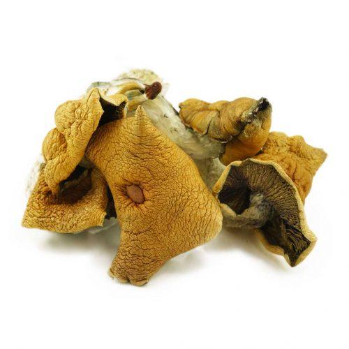 Buy Magic Mushrooms Canada, Online Mushrooms Canada